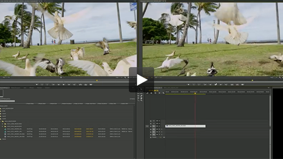 See how NVIDIA GPU acceleration of Adobe Premiere Pro CC compares to a CPU